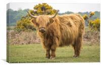 A Highland Cow in the New Forest, Canvas Print