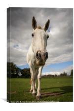 White Horse, Broadmayne,, Canvas Print