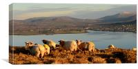 View over Dingle Bay, Canvas Print