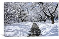 Winter Canopy, Canvas Print