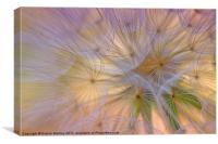 Dandelion Fluff, Canvas Print