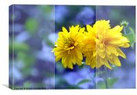 Tall Yellow Wildflowers, Canvas Print