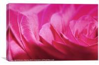 Pink Sparkle, Canvas Print