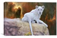 Rare White Lion, Canvas Print
