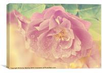 Vintage Pink Rose, Canvas Print