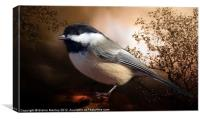 Black Capped Chickadee, Canvas Print
