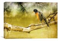 Upset Robin in the Rain, Canvas Print