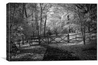 Woods, Bentley woods Harrow, Canvas Print