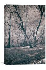 Infra Red Woods At Bentley Woods, Canvas Print