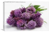 Chive flowers, Canvas Print