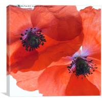 Orange poppies, Canvas Print