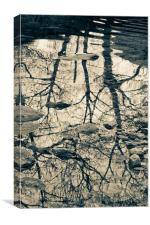 Reflected trees, with stones, Canvas Print