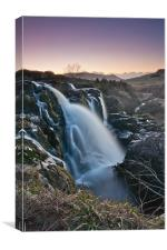 Loup of Fintry, Canvas Print