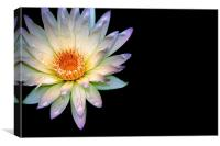 Waterlily, Canvas Print