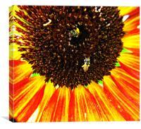 Sunflower Bloom, Canvas Print