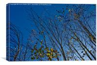 Scottish woodland in November, Canvas Print