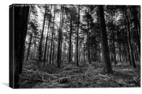 Black and White Woodland, Canvas Print