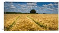 Through the cornfield, Canvas Print