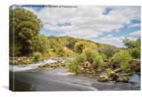 River Stour Dudsbury, Canvas Print