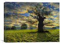 Sunrise On A Windsor Oak, Canvas Print
