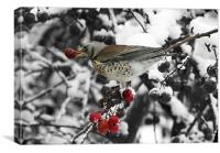 Berry Feast For Fieldfare, Canvas Print