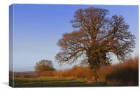 January oak sunset, Canvas Print