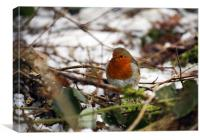 Robin in the snowy copse, Canvas Print