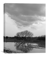 Tree Reflection Under Black Cloud, Canvas Print