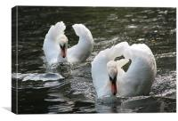 2 swans on a lake, Canvas Print