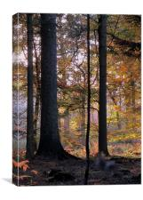 Enchanted Forest, Canvas Print