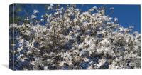 Spring in full bloom, Canvas Print
