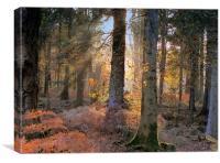 Secret Forest, Canvas Print