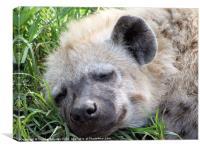 Let sleeping hyena's lie..., Canvas Print