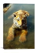 Tiger in water, Canvas Print