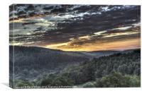 Forest Sunrise, Canvas Print