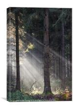 Light Beams, Canvas Print