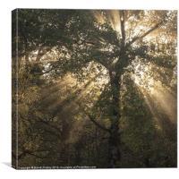 Sunbeams, Canvas Print