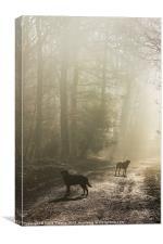 Misty Woodland Walk, Canvas Print