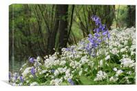 Bluebells and Wild Garlic, Canvas Print