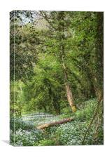 Spring Garlic Footpath, Canvas Print