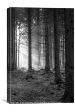Woodland Light Beams, Canvas Print