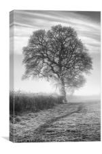 Misty Morning Oak, Canvas Print