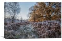Along the Frosty Path, Canvas Print