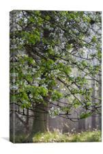Wild Cherry Blossom, Canvas Print