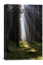 Along the Sunlit Path, Canvas Print
