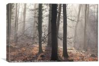 Winter Sun-rays, Canvas Print