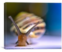 snail pace, Canvas Print