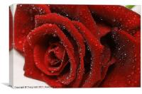 Showered Red Rose, Canvas Print