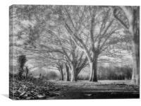 Beneath the trees, Canvas Print