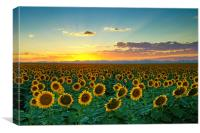Sunflower Sea, Canvas Print